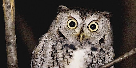 Family Outdoor Experience - Owl Prowl in the light of the Full Moon tickets