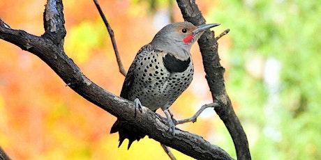 Gardening to Attract Birds (Live Stream) tickets