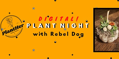 DIY (Virtual) Succulent & Dried Flower Pumpkins with PlantHer and Rebel Dog tickets