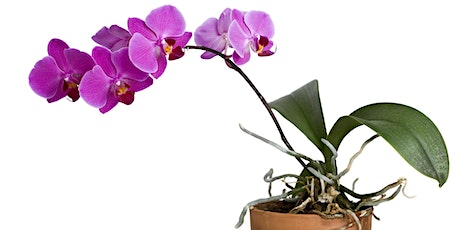 Growing Orchids in South Florida  LIVE @ Fairchild with Dr. Sandra Schultz tickets