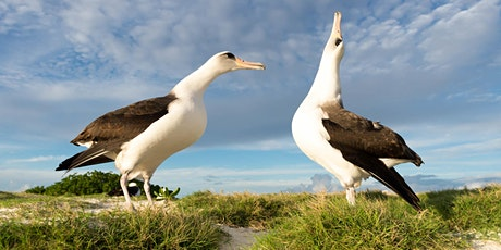 Laysan Albatross: Their Style and Story by Hob Osterlund tickets