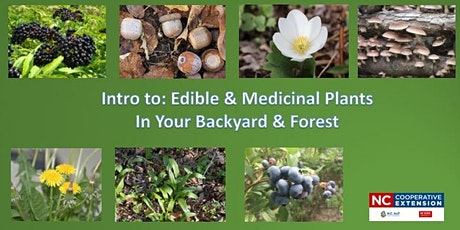 Edible and Medicinal Plants in Your Backyard and Forest tickets