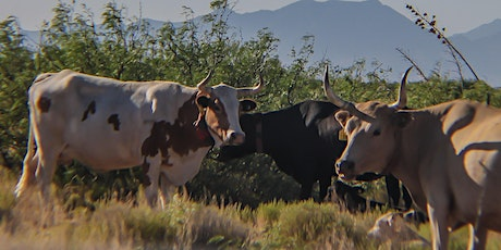 Sustainable Southwest Beef Project Virtual On-ranch Demo 2020 tickets
