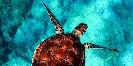 Gecko Talk: Turtle Watch Program on the Gold Coast tickets