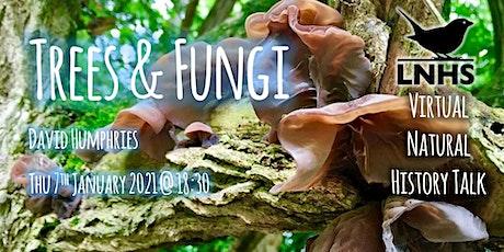 Trees and Fungi by David Humphries