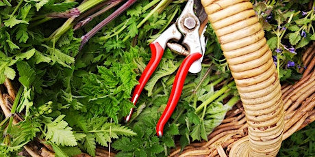 Wild Food Foraging Walk - Brighton (morning) tickets