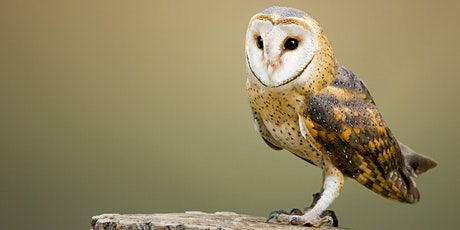 Webinar: Live From Duke Farms - Dining with Owls