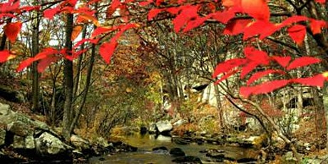 Long Fall Hike - Town Park to Ward Pound Ridge Reservation tickets