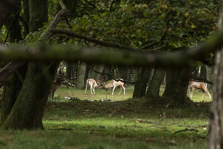 Afbeelding van Wildsafari Amsterdamse waterleidingduinen -volwassen/kids- off track