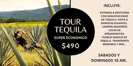 Tour a Tequila Súper económico $490 -Barricas Gigantes y Pueblo Mágico