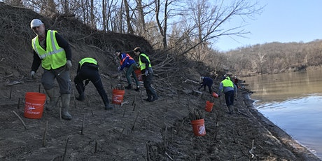 Willow Staking in Lower Meramec Park tickets