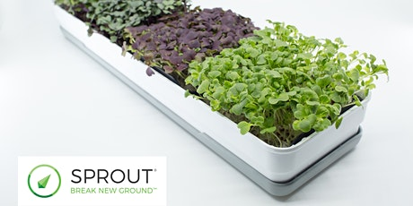 Sprout Your Start-up (Nelson)