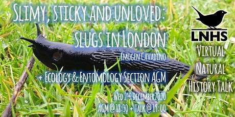 Slimy, Sticky and Unloved: Slugs in London by Imogen Cavadino + E/ E AGM tickets