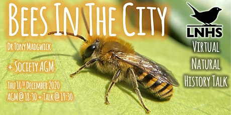 Bees in the City by Tony Madgwick and LNHS AGM tickets