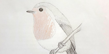 Get Drawing Birds: Art for Wellbeing Workshop tickets