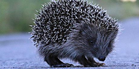 Create a Hedgehog Hibernation Home