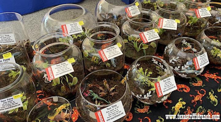 Halloween Carnivorous Plant Porch Sale at the Texas Triffid Ranch image