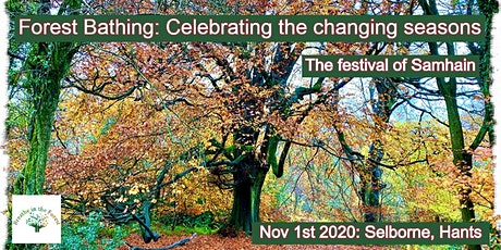 Forest Bathing: Celebrating the changing seasons at Samhain tickets