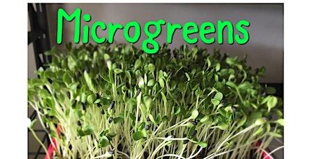 Microgreens workshop tickets