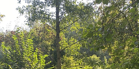 Earthwalk/Forest Bathing - Nurture yourself in our Natural World tickets
