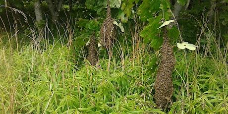Swarm Control, Moray