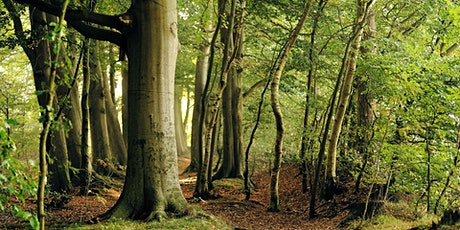 Forest Bathing+ Experience - Mindfulness in Nature 2hrs tickets