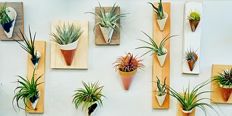 Become an Air Plant Expert (Live Stream) tickets
