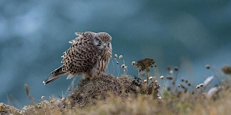 """Wildlife of the Dorset Coast"" - Online Talk tickets"