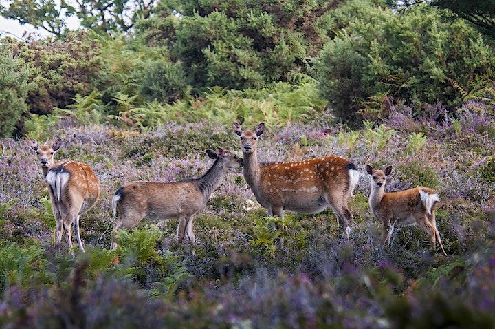 """Wildlife of the Dorset Coast"" - Online Talk image"