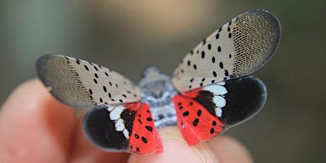 Spotted Lanternfly Spotting tickets