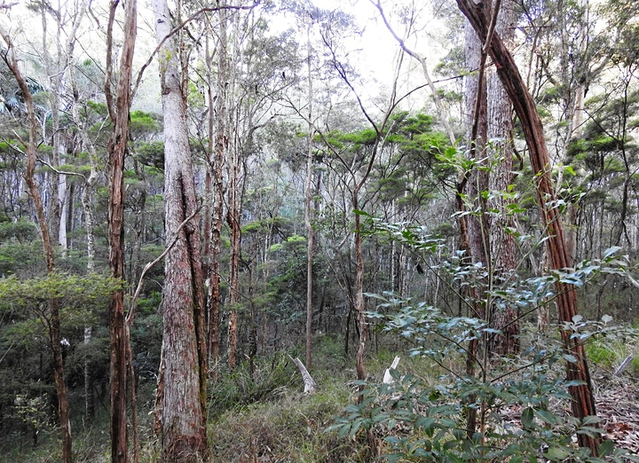 "Guided Walk - ""The Aussie Bush Story"" image"