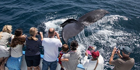 Fall Whale & Dolphin Cruises During Migration-$20 Special tickets