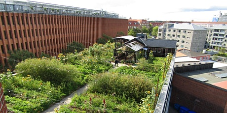 Carl Pickens: Urban Agriculture