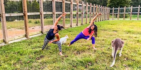 Safari Tails Kangaroo Yoga tickets