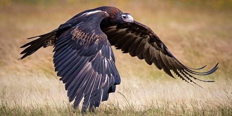 Ultimate Birds Of Prey Photography Workshop - VIC tickets