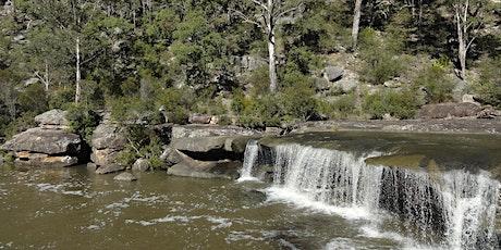 Bush Explorers - Summer Serenity Stroll - The Basin tickets