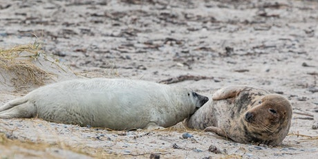 Book to see the seals at Donna Nook – Sun 25 Oct tickets