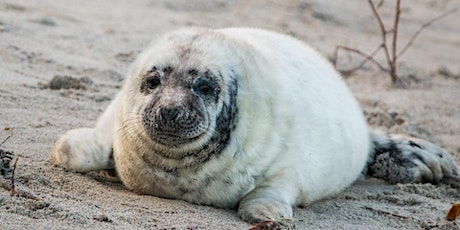 Book to see the seals at Donna Nook – Tues 27 Oct tickets