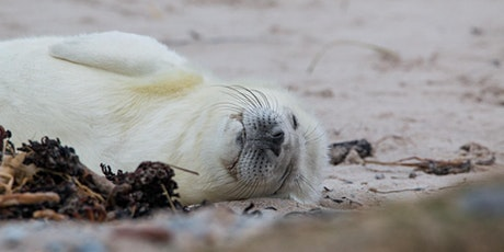 Book to see the seals at Donna Nook – Weds 28 Oct tickets