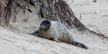 Book to see the seals at Donna Nook – Thurs 29 Oct tickets