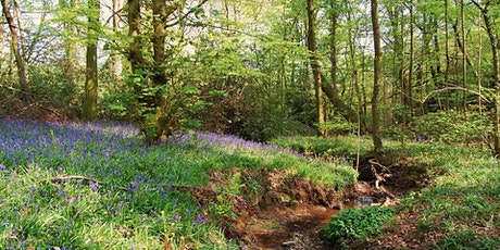 Temporarily Cancelled Volunteer Work Day: Moss Valley Woodlands tickets