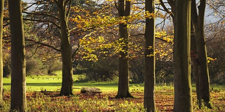 Timed car parking at Hatfield Forest (19 Oct -  25 Oct) tickets