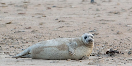 Book to see the seals at Donna Nook – Sat 31 Oct tickets