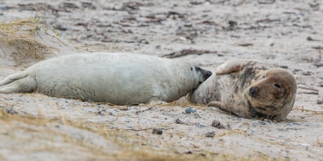 Book to see the seals at Donna Nook – Mon 2 Nov tickets