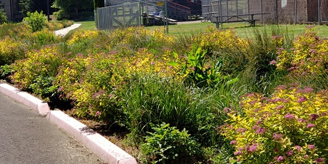 Vegetated Stormwater Facilities - Virtual tickets