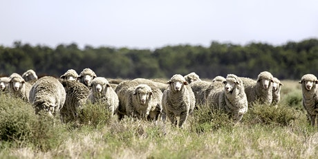 Winning With Weaners - COOMA tickets