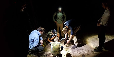 FrogID Week: Frog Spotting for Families at Simpsons Gap (Alice Springs) tickets