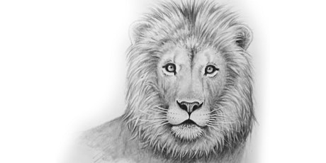 60min Animal Pencil Sketching Art Lesson - Lion @10AM (Ages 7+) tickets