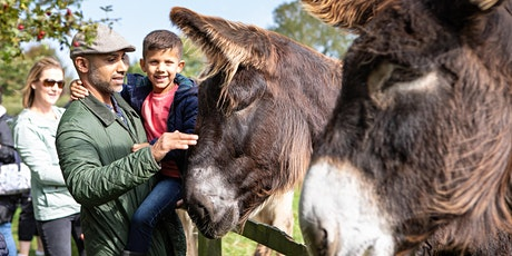 October Half Term at The Donkey Sanctuary tickets