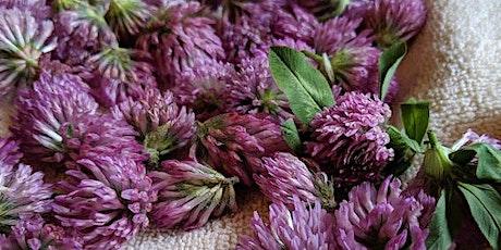 Medicine Oils & Herbs with Massaro tickets